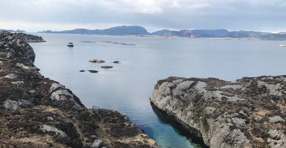 Ved konsesjonsområdet Klippenesvika vil Ramsholmen AS etablera taredrift. Lokaliteten ligg like utanfor Klippenesskjæra, sør for det eksisterande anlegget til Erko Seafood. Foto: Karl Fredrik Helgesen.