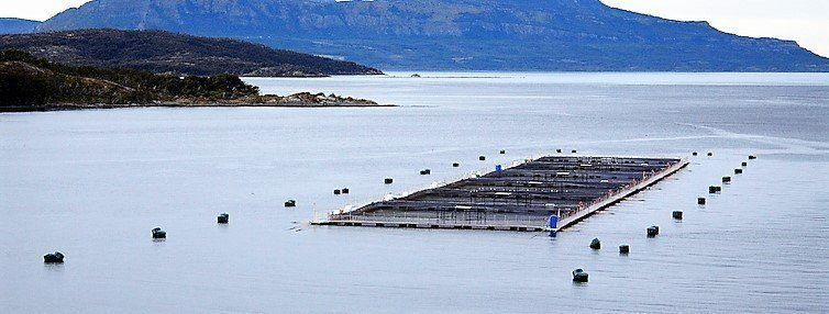 Production of salmonids in Chile grew by 6.5% in 2018, with Atlantic salmon volumes up by 8.6%.