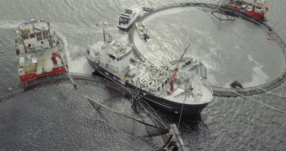 Pure Shipping på avlusingsoppdrag på merdkanten. Foto: K2 Filmproductions.