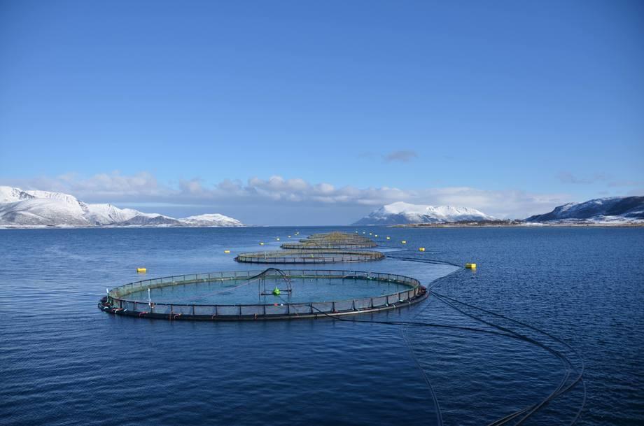 Reinsnesøya, where 840-gram smolts were set out in May. Photo: Eidsfjord Sjøfarm.