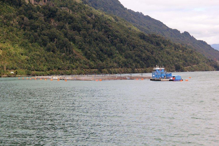 Centro de cultivo de Salmones Caleta Bay en Cochamó, Región de Los Lagos. Imagen: Archivo Salmonexpert.