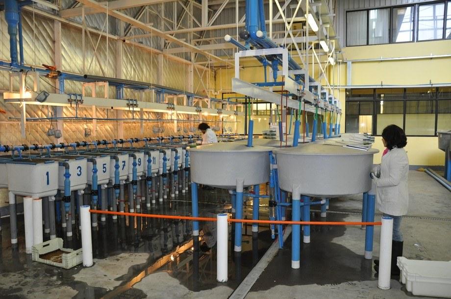 Unidad experimental de acuicultura, UCT. Foto: Dra. Ximena Araneda.