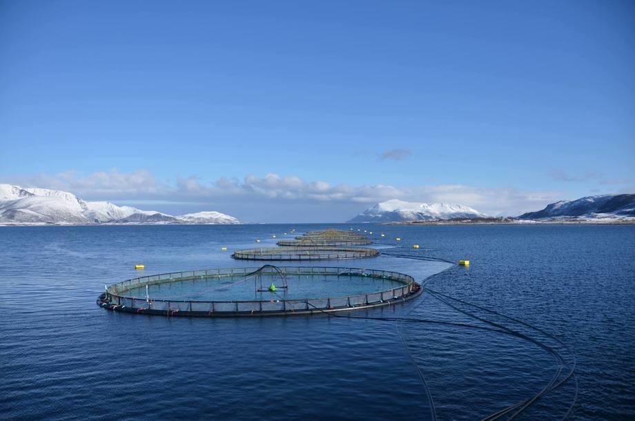 Reinsnesøya, donde ingresaron smolts de 840 gramos en mayo. Foto: Eidsfjord Sjøfarm.