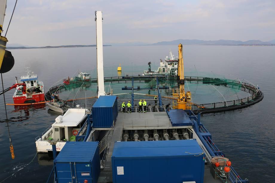 Verdens største avluser her i drift på fartøyet MS Steyer. Man ser kulerekka/perlebandet som brukes ved trenging av hele merden på en gang. Foto: Aquatiq.