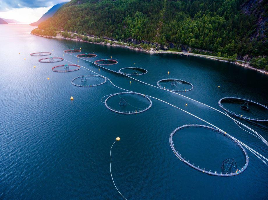 Blått hav - grønne forretningsmuligheter var tema for dialogmøte hos Bergen Teknologioverføring . Foto: BTO