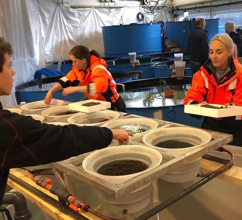 Med en produksjon på 600 000 rensefisk i året, er det nok å gjøre for de syv ansatte i selskapet. Foto: Austevoll Rensefisk