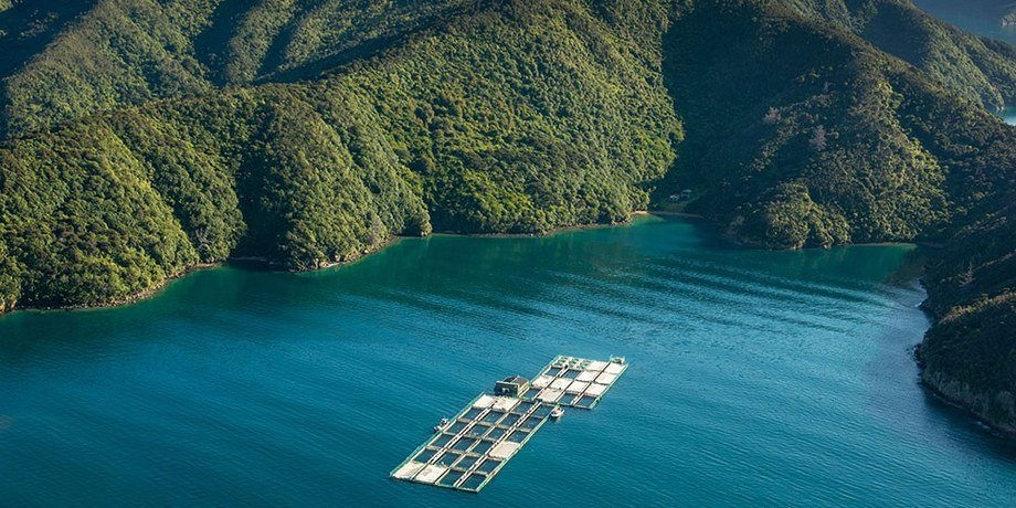 New Zealand King Salmon has eight farms in the Marlborough Sounds but cannot expand to meet demand. Photo: NZ King Salmon