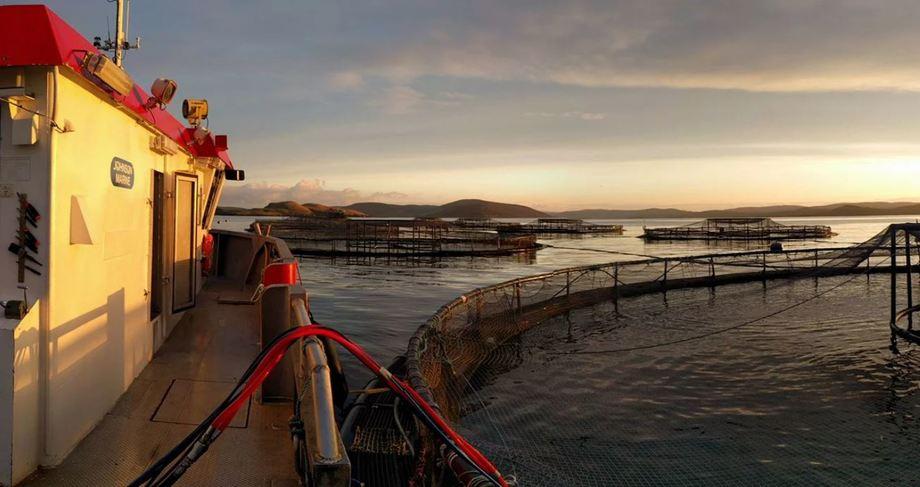 Johnson Marine operates nine wellboats and six service vessels. Photo: Johnson Marine