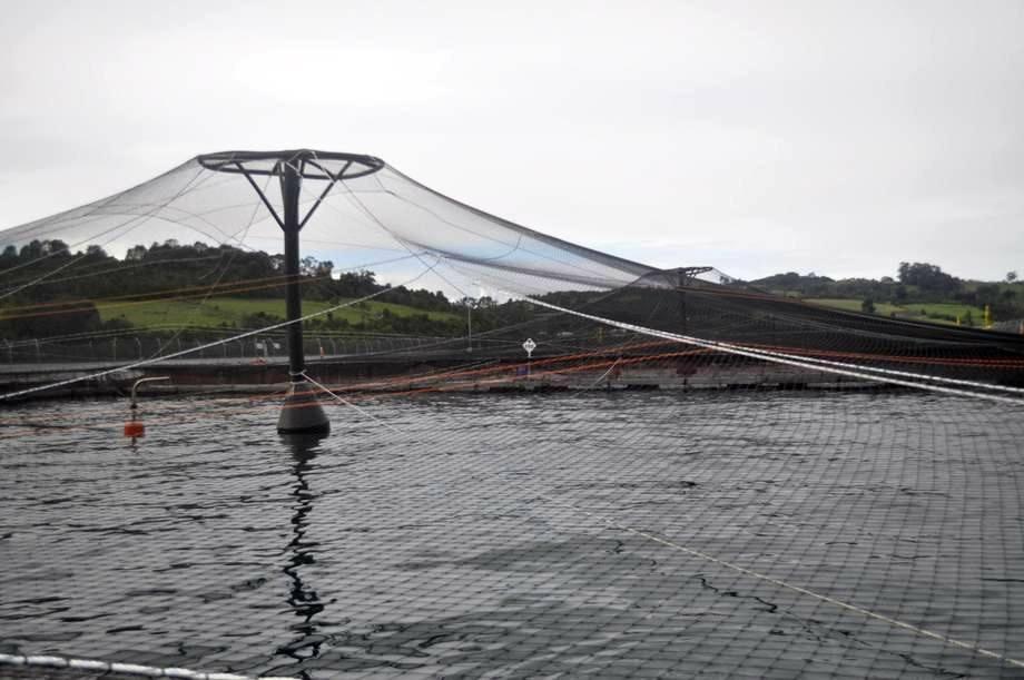 Centro de cultivo de Marine Harvest. Foto: Daniella Balin, Salmonexpert.