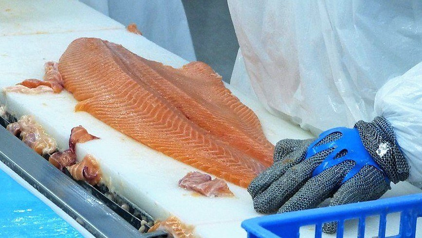 Filete de salmón Atlántico. Foto: Archivo Salmonexpert.