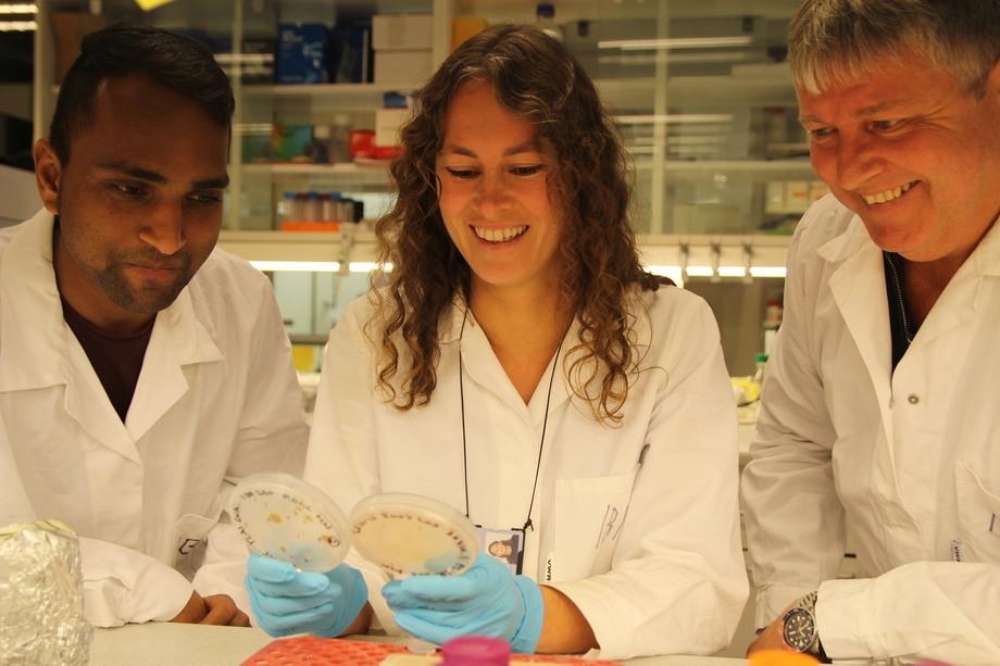 12018 kan vi med stor presisjon gjøre endringer  i en på forhånd definert posisjon i arvestoffet. Kunnskapen om arvestoffet er kommet så langt at vi også kan produsere enkle syntetiske celler i labben. F.v. Amit Sharma (PhD stipendiat)-Marianne Nymark (forsker)-Per Winge (førsteamanuensis). Foto: NTNU.