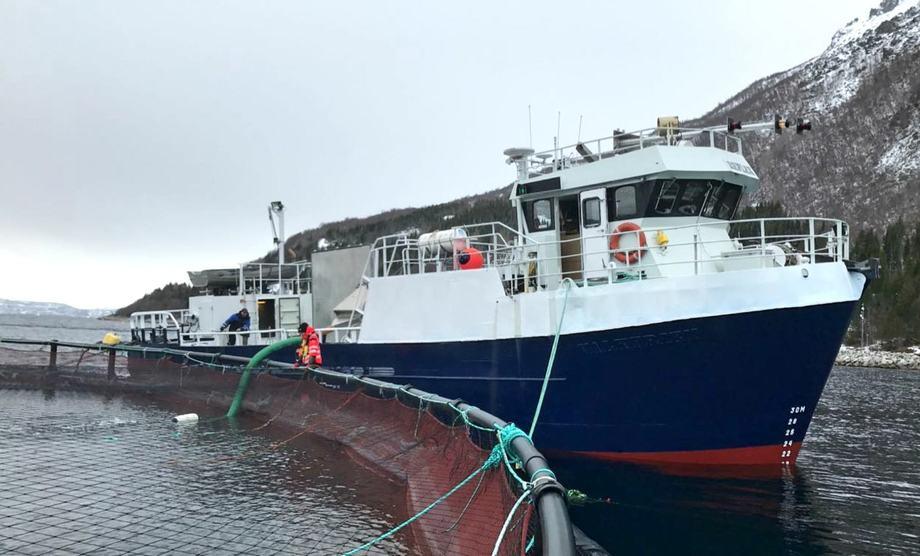 Reflex Shipping har spesialisert seg på transport av rensefisk. Foto: Reflex Shipping