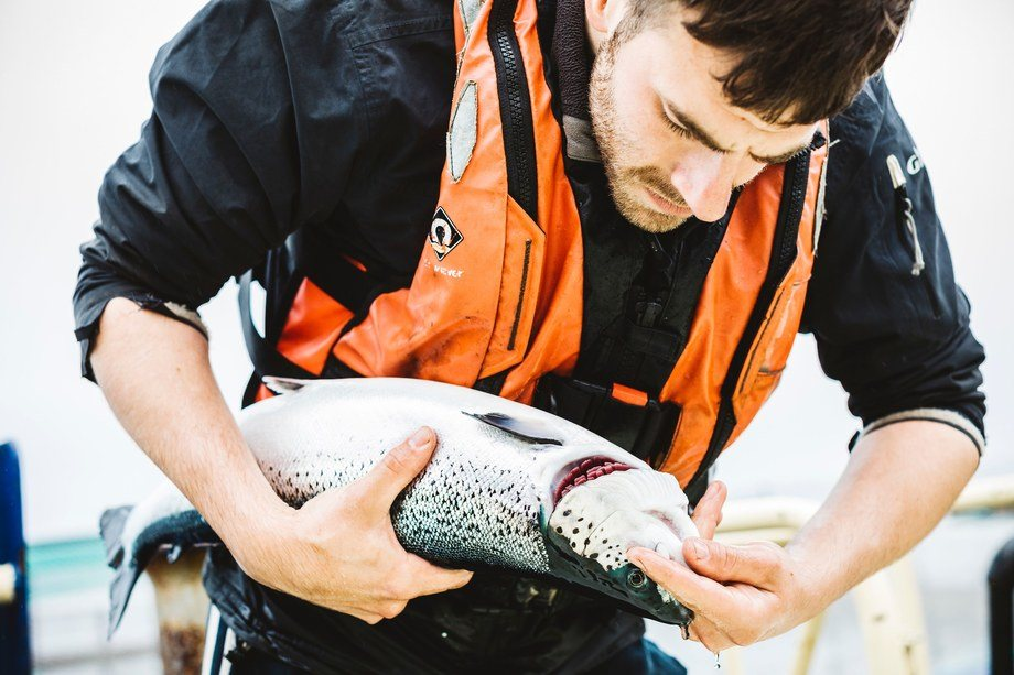 Marine Harvest and Scottish Sea Farms have reported improvements in fish health. Photo: SSF