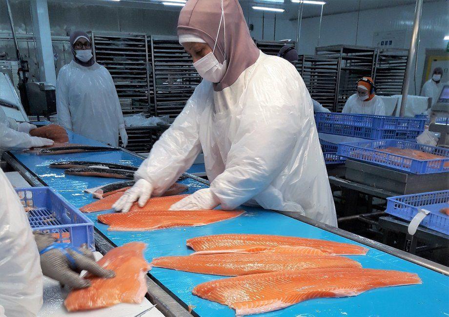 Planta de proceso de Aquachile. Foto: Loreto Appel, Salmonexpert.