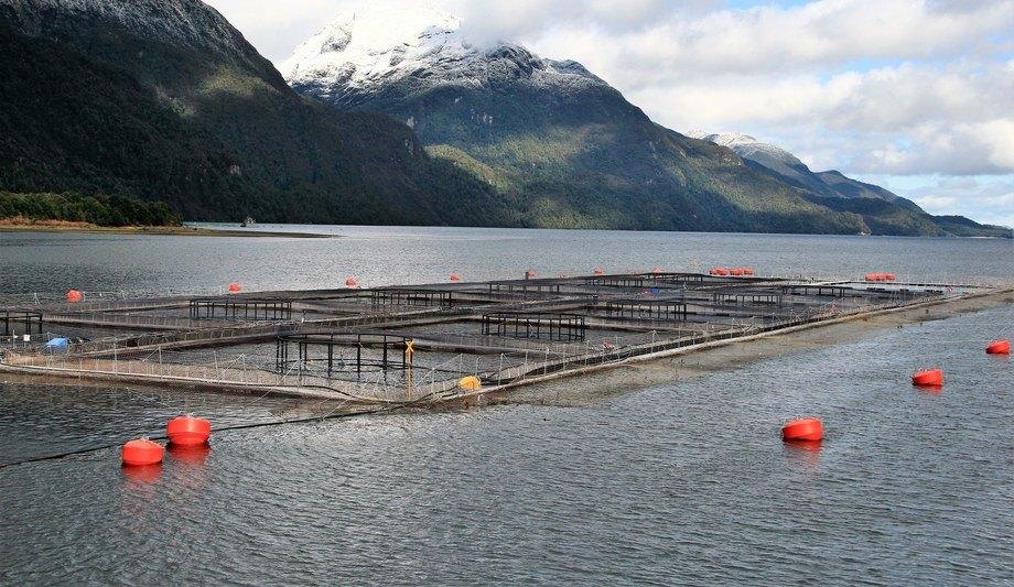 Imagen referencial de centro de salmón. Foto: Mario Mendoza Cabrera.