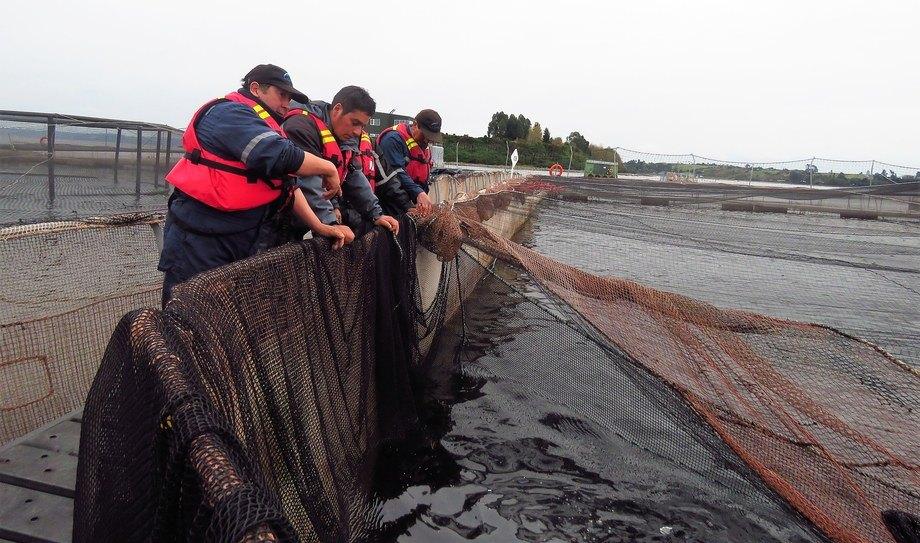 Trabajadores en centro de cultivo. Foto: Loreto Appel, Salmonexpert.