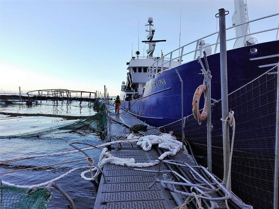 Five cages were destroyed and four badly damaged during storms that led to a huge fish escape at Punta Redonda. Photo: Marine Harvest