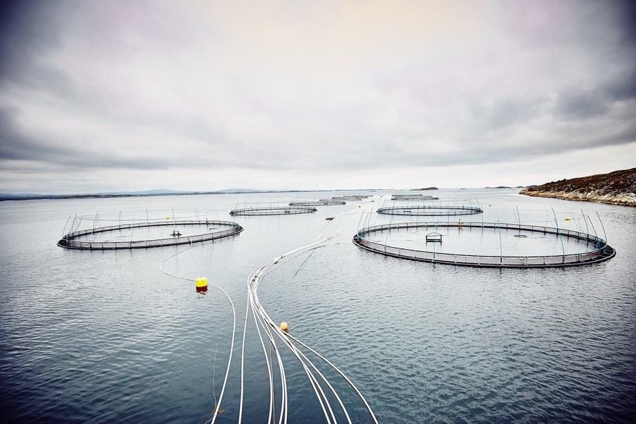 Måsøval Fiskeoppdrett gjør det bedre enn søsterselskapet. Her fra lokaliteten Espnestaren. Foto: Måsøval.