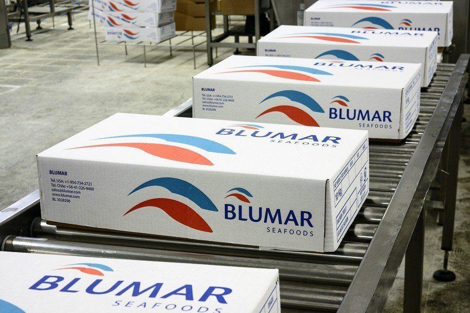 El 46% de los ingresos totales de Blumar provienen del salmón Atlántico. Foto: Blumar.