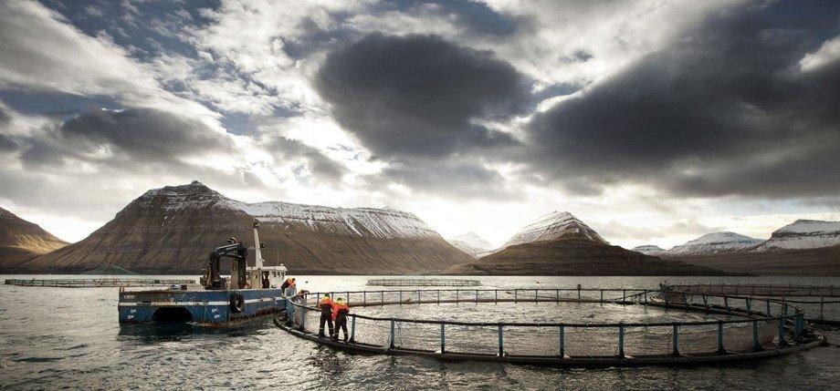 Bakkfrost fikk et godt Q3-resultat mener Nordea. Illustrasjonsfoto: Bakkafrost.