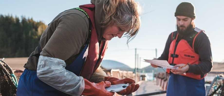 Lice levels were much higher and fish survival rates slightly lower for Cermaq Canada in the second quarter of 2018. Photo: Cermaq