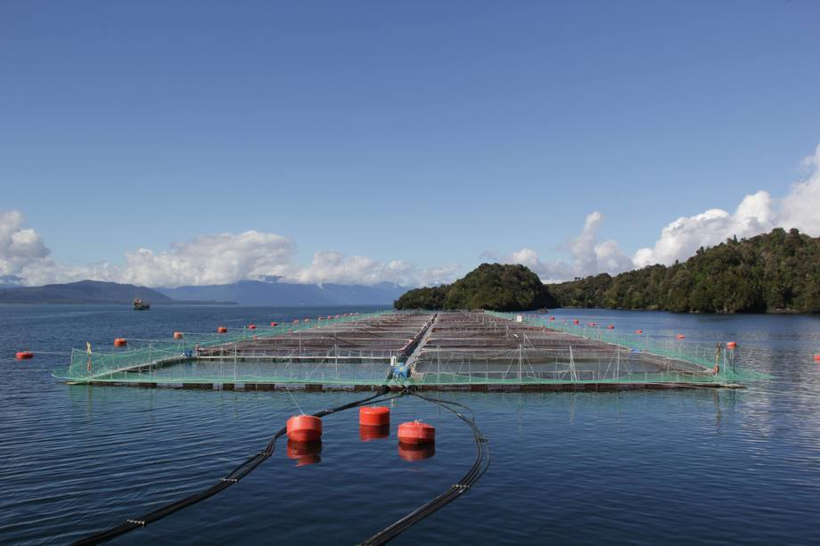 El estudio espera abordar efectos ambientales de la materia orgánica liberada en la producción de salmones. Foto: Archivo Salmonexpert.