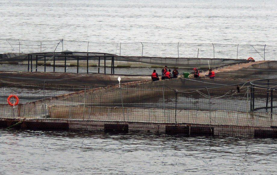 Imagen referencial centro de cultivo de salmón. Foto: Archivo Salmonexpert.