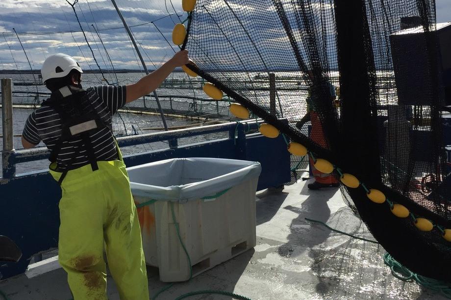 Orkastnot som skal brukes til prøvetaking. På dekk står karet som brukes til bedøvelse før lusen telles (foto: SINTEF Ocean).