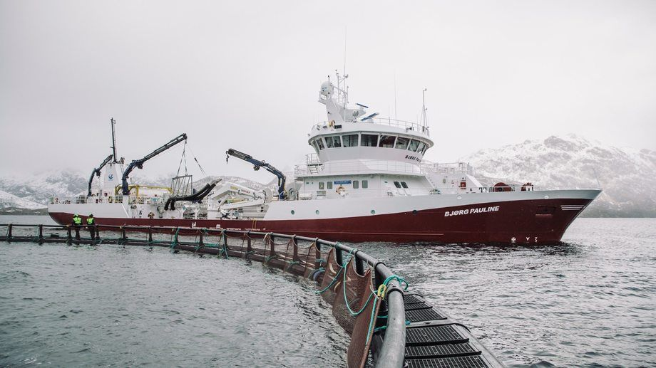 The Bjørg Pauline, once the world's biggest wellboat by volume, has changed owners. Photo: Marius Fiskum, Norwegian Seafood Council.