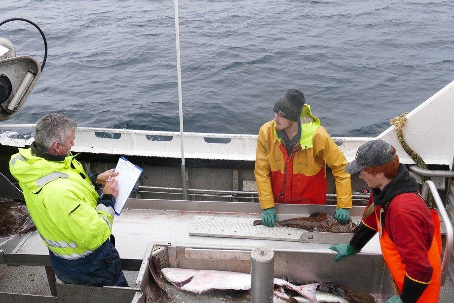 Havforskningsinstuttet utvider kystreferanseflåten med nye fartøy. Foto: Havforskningsinstituttet