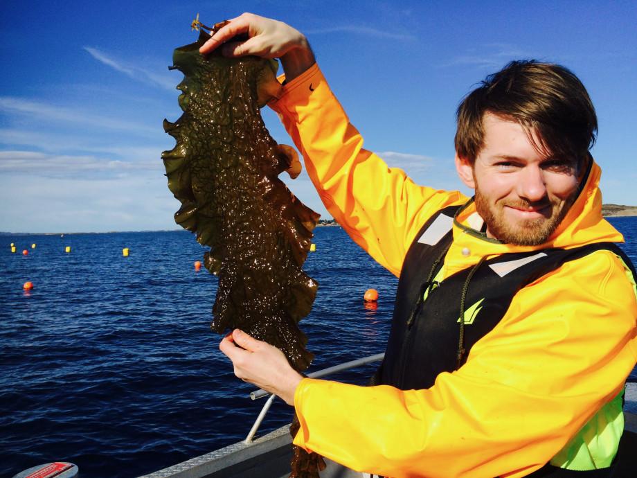 Daglig leder Jon Funderud viser frem noe av taren de tidligere har høstet. Foto: Seaweed Solutions AS.