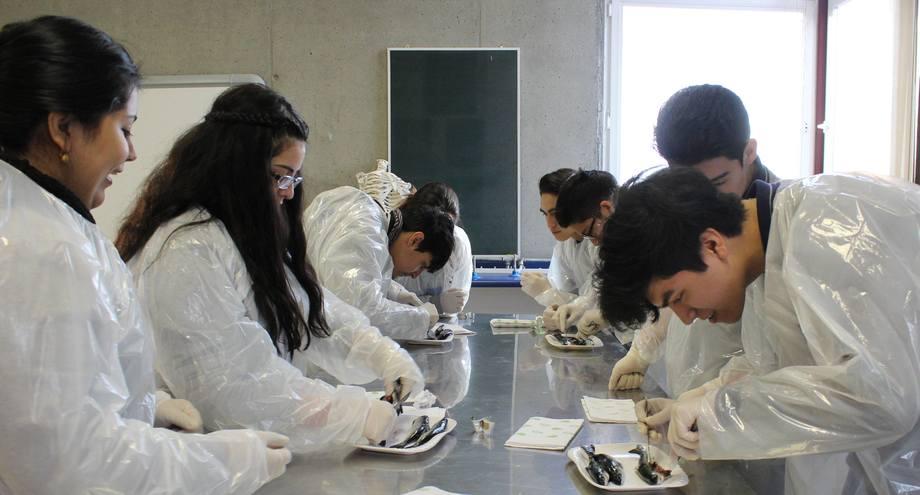 Realizan taller sobre anatomía del salmón a estudiantes de ...