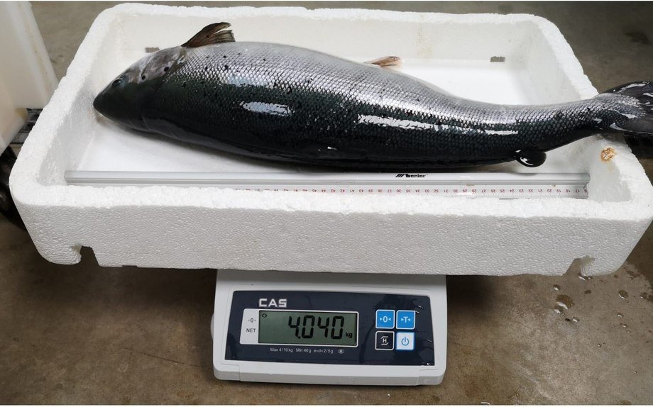 Fisk på 4 kg som aldri har sett havet. Foto: AquaMaof
