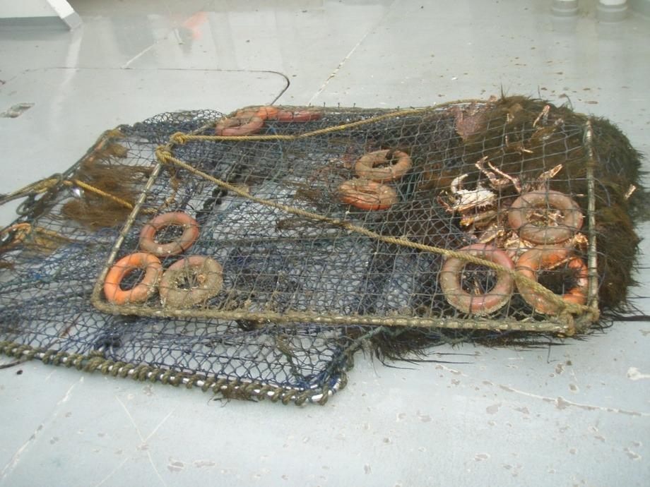Illustrasjonsfoto: Fiskeridirektoratet