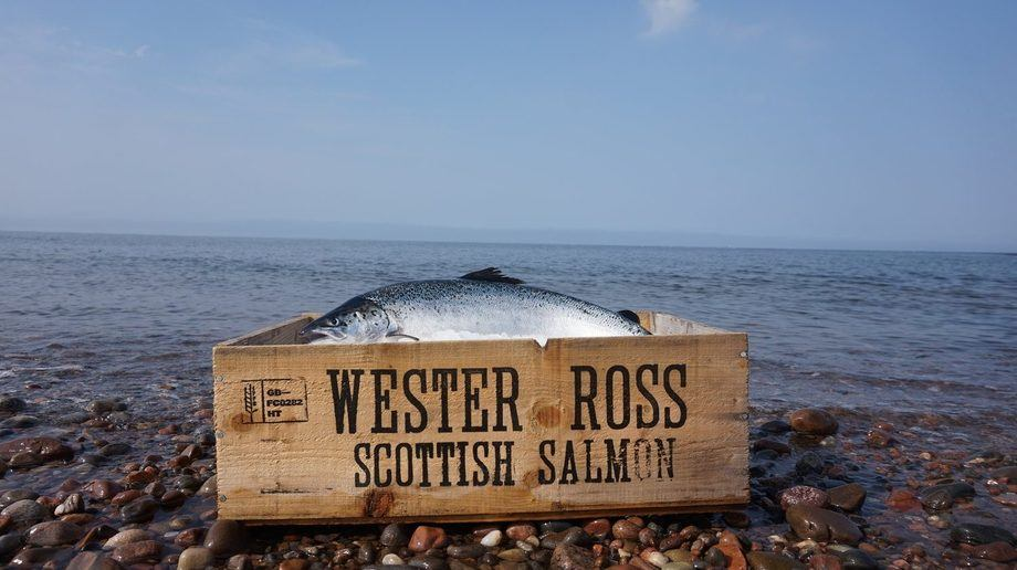 The small salmon farmer has nearly doubled exports in three years. Photo: Wester Ross Fisheries