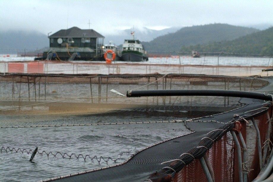 GSSI se basa en las directrices de la FAO para el ecoetiquetado de productos del mar. Imagen: Archivo Salmonexpert.