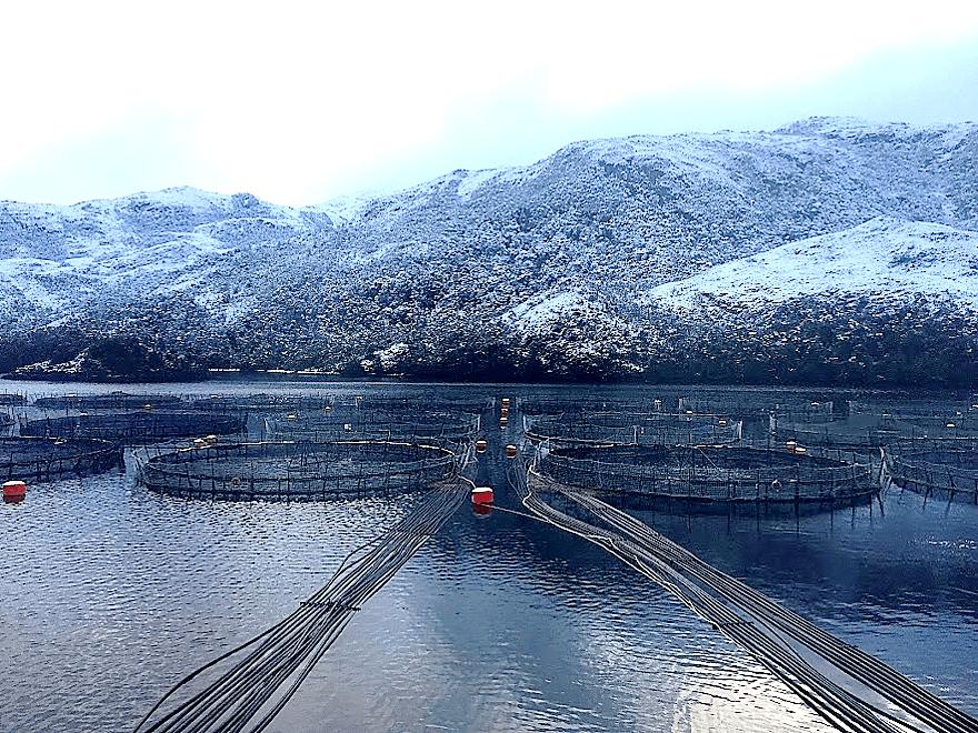 Centro de cultivo, Magallanes. Imagen, Elanco.