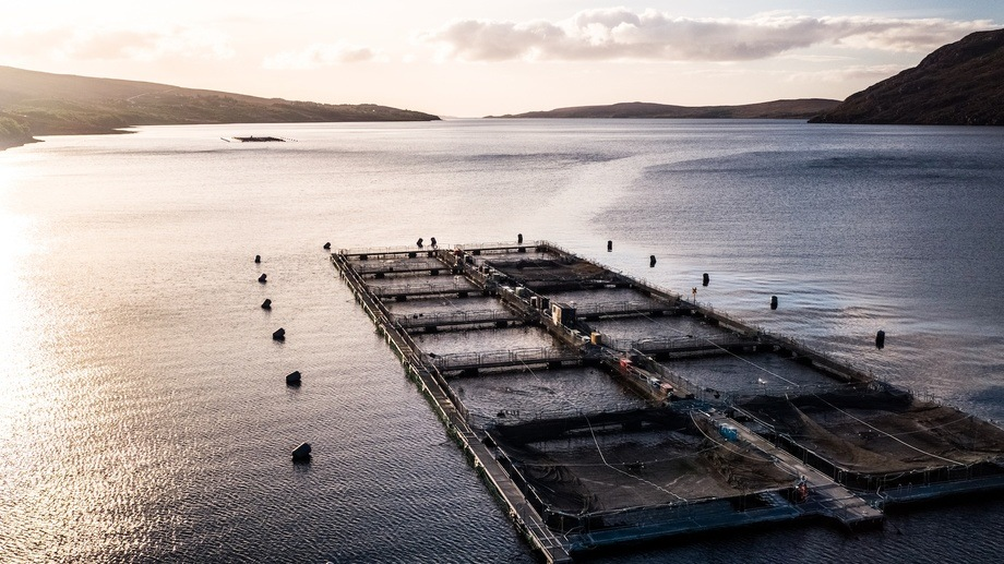 Wester Ross's Ardessie farms were hit by mass mortality events in August 2018 but the company finished the year in a strong position. Photo: Wester Ross Fisheries.