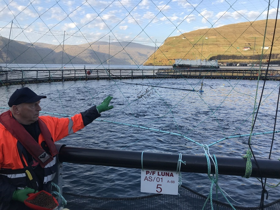 På lokaliteten Vestmanna har Hiddenfjord nylig satt ut smolt med en gjennomsnittstørrelse på hele 650 gram. Foto: Hiddenfjord.