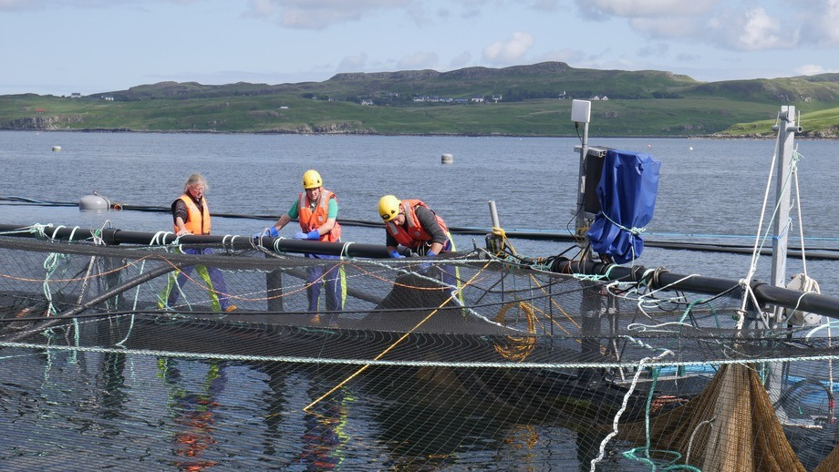 Marine Harvest's Scottish workers have helped the company increase Q3 profits. Photo: FFE