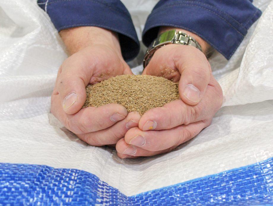 Nordlaks er første selskap som tester Skrettings nye fiskefôr med insektmel. Foto: Skretting.
