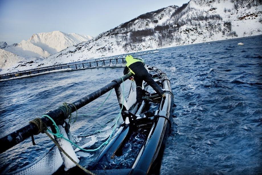 Illustrasjonsfoto fra oppdrettsanlegg i Finnmark. Foto: Grieg Finnmark.