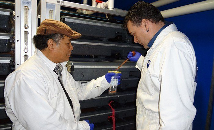 Picture: Dr. Jesse Ronquillo, left, North Island College aquaculture technician certificate instructor, collects salmon egg samples from incubation trays with Scott Peterson, hatchery site manager at Grieg Seafood. Source: North Island College