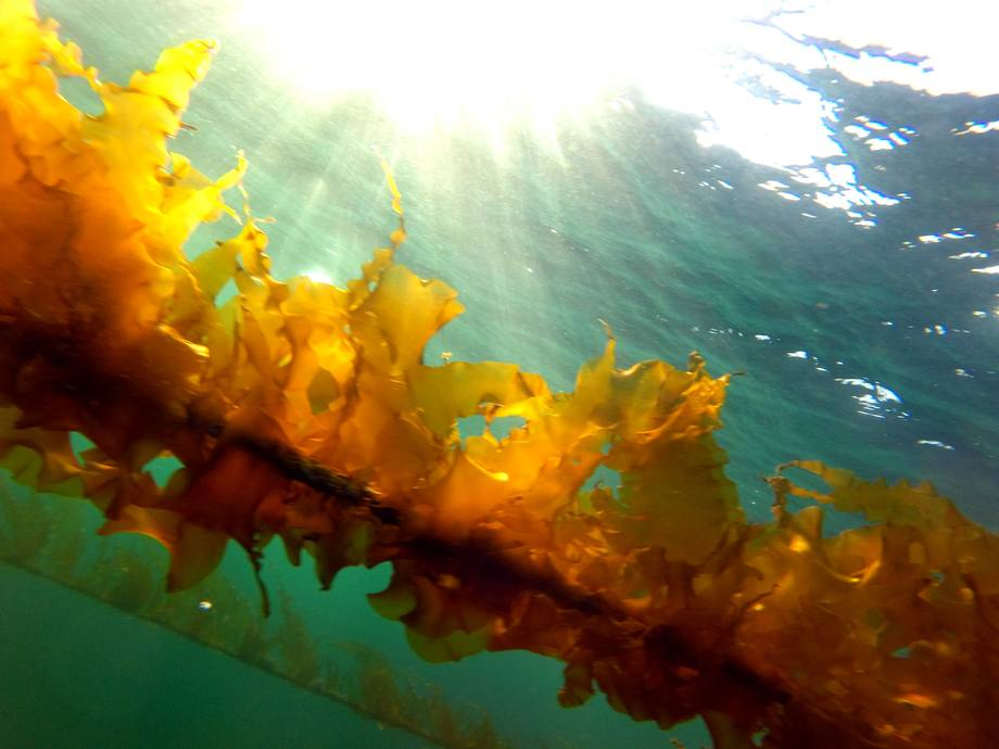 Illustrasjonsfoto tare. Foto: Seaweed AS.