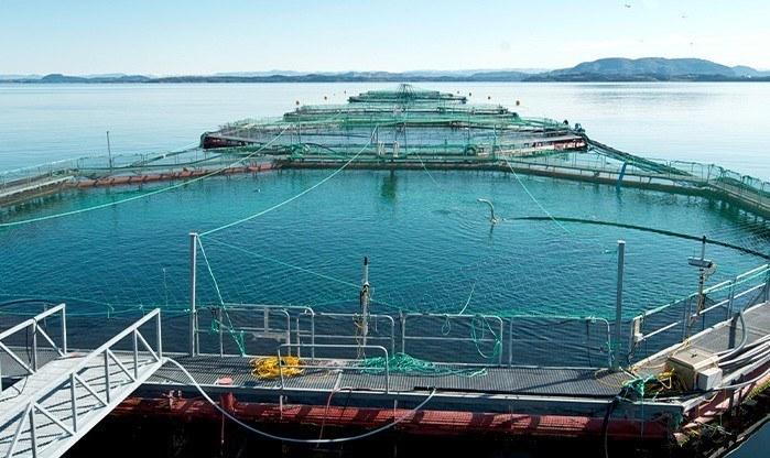 Foto: Blom Fiskeoppdrett AS.