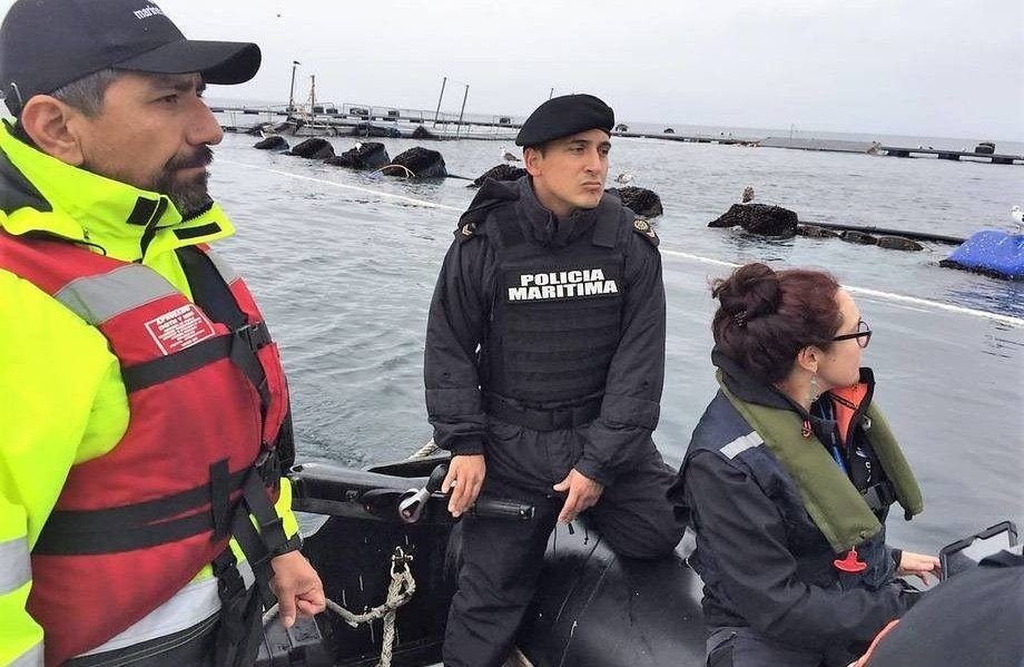 Inspection work at the Punta Redonda farm, where 690,000 salmon escaped from cages wrecked by bad weather in July. Photo: SMA