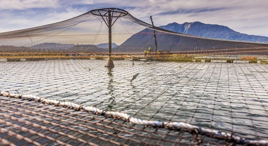 La institución gubernamental manifestó  los hechos constitutivos de infracción y que la compañía salmonicultora arriesga una multa de hasta UTA 10 mil. Foto: Marine Harvest.