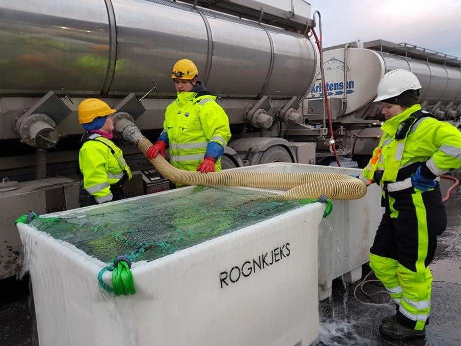Overlevering av rognkjeks fra Finnmark rensefisk til Grieg Seafood Finnmark. Foto: GSF.