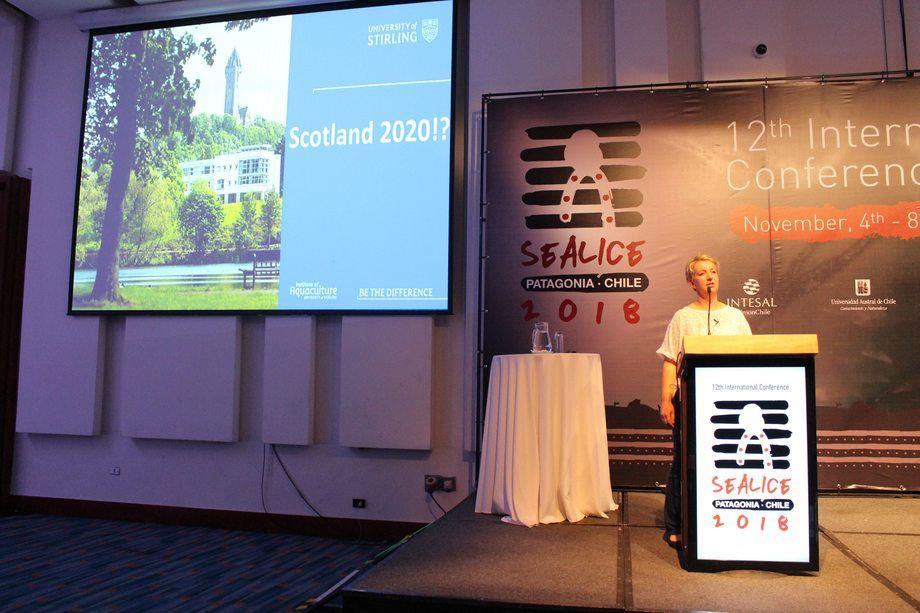 Escocia fue elegido como sede de la próxima conferencia Sea Lice 2020. Foto: Edgardo Vera.