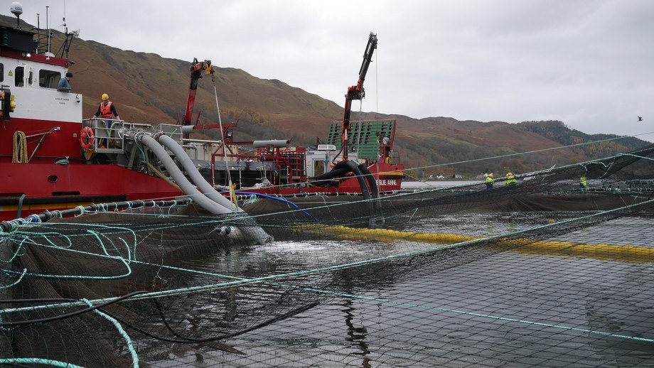 File photo of a Hydrolicer being used on a Scottish farm. Fish farmers kept the average number of adult female lice on fish down to 0.52 last year. Photo: FFE.